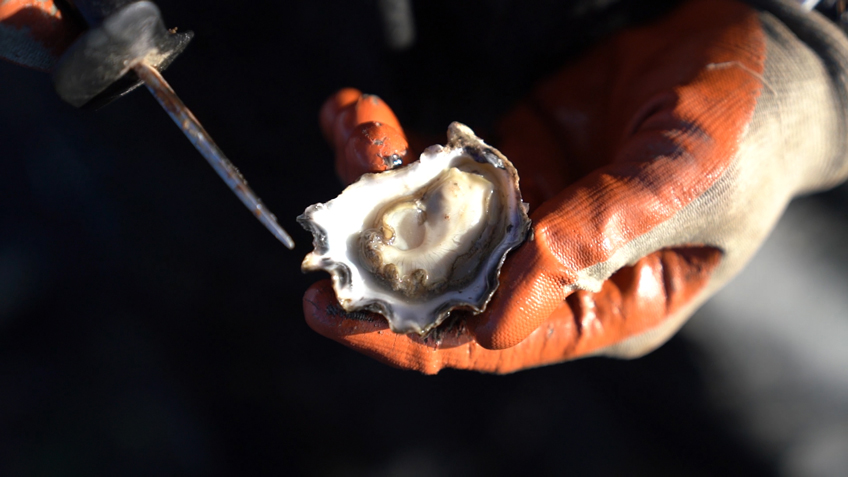 Mimosa Rock Oysters, Carriageworks, From the Farm, Carriageworks Farmers Market